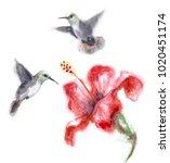 watercolor painting.  hand...   Shutterstock . vector #1020451174