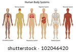 illustration of the human body... | Shutterstock .eps vector #102046420