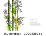 vector isolated watercolor hand ... | Shutterstock .eps vector #1020525166