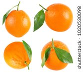 Isolated Oranges. Collection O...