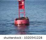 sea lions on a buoy | Shutterstock . vector #1020541228