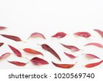 directly above view of red... | Shutterstock . vector #1020569740