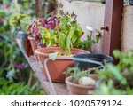 garden pots sitting on wooden
