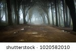 path in a forest covered with... | Shutterstock . vector #1020582010