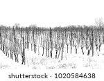 winter vineyards  snow covered... | Shutterstock . vector #1020584638