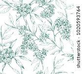 vector seamless herbal... | Shutterstock .eps vector #1020593764