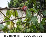 Small photo of vines growing in a garden with green plants and ivy taking over the fence under a summer afternoon sun. wood and nature textures abound with budding flowers that bring happiness and joy fresh star