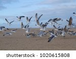 seagulls flying on the beach | Shutterstock . vector #1020615808