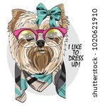 vector dog with glasses and... | Shutterstock .eps vector #1020621910