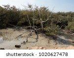 desert lake in ras mohammed...   Shutterstock . vector #1020627478