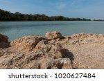 desert lake in ras mohammed...   Shutterstock . vector #1020627484
