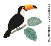 toucan and palm leaves on the... | Shutterstock .eps vector #1020628918
