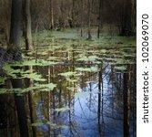 swamp | Shutterstock . vector #102069070