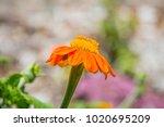 a close up photograph of an... | Shutterstock . vector #1020695209