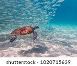 snorkelling at westpunt   views ...   Shutterstock . vector #1020715639