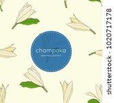 white champaka hand draw... | Shutterstock .eps vector #1020717178