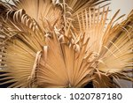 dry palm leaf  dried sugar palm ... | Shutterstock . vector #1020787180