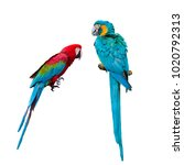 Beautiful Red And Blue Macaw...