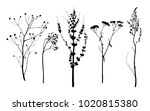 set of vector dry herbs... | Shutterstock .eps vector #1020815380