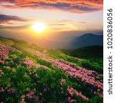 amazing  nature sunrise ... | Shutterstock . vector #1020836056