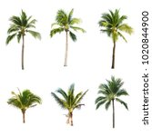 Coconut Tree White Background  - Fine Art prints