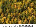 Small photo of forest in Kanas,China,Asia.