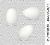 easter eggs vector design ... | Shutterstock .eps vector #1020902644