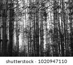 thicket  forest black and white | Shutterstock . vector #1020947110