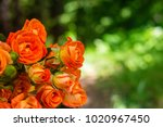 Orange Roses On Fresh Green...