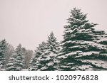 beautiful trees covered by snow ... | Shutterstock . vector #1020976828