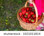 cute little girl holding the... | Shutterstock . vector #1021011814