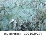 fossil shell on the sedimentary ... | Shutterstock . vector #1021029274