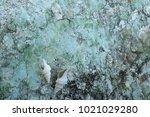fossil shell on the sedimentary ... | Shutterstock . vector #1021029280