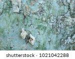 fossil shell on the sedimentary ... | Shutterstock . vector #1021042288