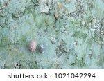 fossil shell on the sedimentary ... | Shutterstock . vector #1021042294
