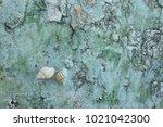 fossil shell on the sedimentary ... | Shutterstock . vector #1021042300