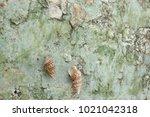 fossil shell on the sedimentary ... | Shutterstock . vector #1021042318