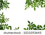tree branch isolated   Shutterstock . vector #1021053643