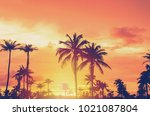 tropical palm tree with... | Shutterstock . vector #1021087804
