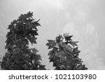 double exposure of tree and...   Shutterstock . vector #1021103980