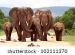 a herd of elephants with baby... | Shutterstock . vector #102111370