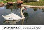 white duck swimming in a canal ... | Shutterstock . vector #1021128700