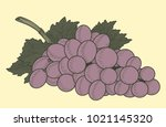 bunch of grapes. hand drawn... | Shutterstock .eps vector #1021145320