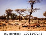 Drought And Famine   Dead...