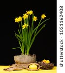 daffodils for easter. yellow... | Shutterstock . vector #1021162408