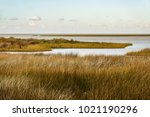 Salt marsh with saltmeadow cordgrass (binomial name: Spartina patens), also known as salt hay grass, saltmeadow hay, and marsh grass, along Ocracoke Island in the Outer Banks of North Carolina, USA