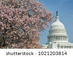 capitol building in spring time ...   Shutterstock . vector #1021203814