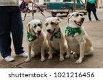 Stock photo saint patrick s day dogs 1021216456
