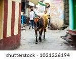 varanasi   november 22 ... | Shutterstock . vector #1021226194