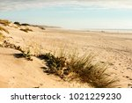 Dunes With Bushes On A Beach I...